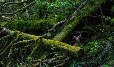 屋久島 森の主 | 絶景事典