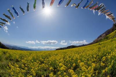 屋根より、た〜か〜い〜♪ 春の風物詩・華やかな鯉のぼりのメイン画像