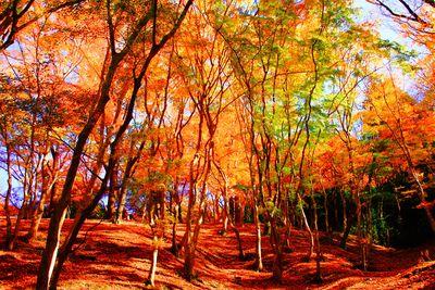香嵐渓の紅葉美 | 絶景事典