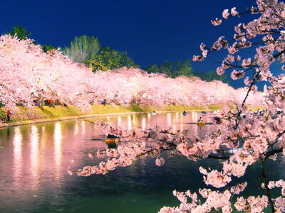 さくら、桜、サクラ! 圧倒的に美しい桜の絶景のメイン画像