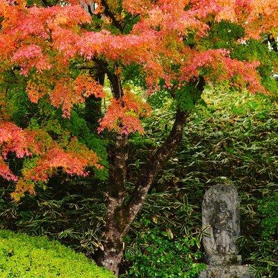 日本昔話の秋   絶景事典