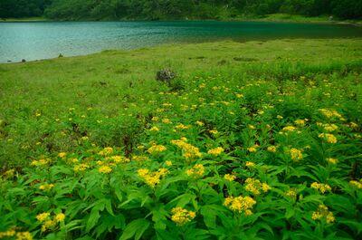 湖畔の花園 | 絶景事典