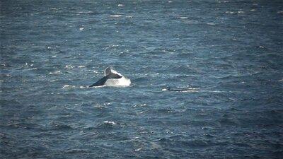 カフェから見えるクジラ | 絶景事典