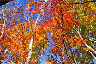 秋の絵本から | 絶景事典