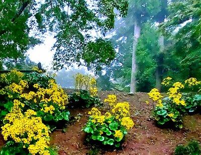 ツワブキの花 | 絶景事典