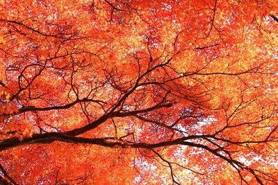赤く美しく街を染める!美しき紅葉の絶景のメイン画像