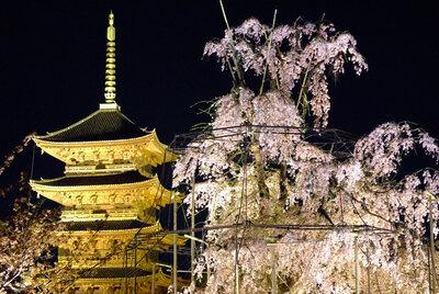 東寺、春宵 | 絶景事典