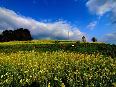 菜の花畑 | 絶景事典