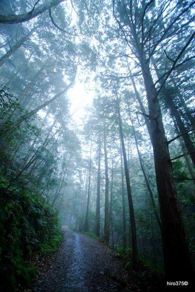雨に煙る森林   絶景事典