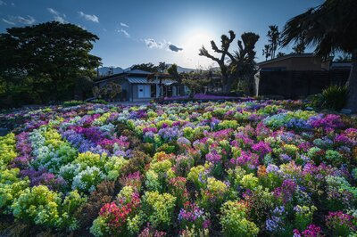 tropical flower | 絶景事典