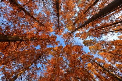 水元公園 メタセコイヤの森 | 絶景事典