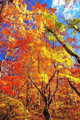 秋のスケッチ | 絶景事典
