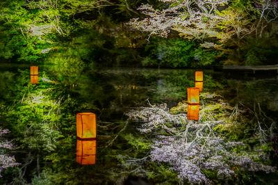 水面と夜桜(HDR撮影) | 絶景事典