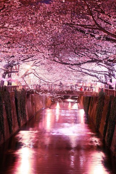 桜🌸 | 絶景事典