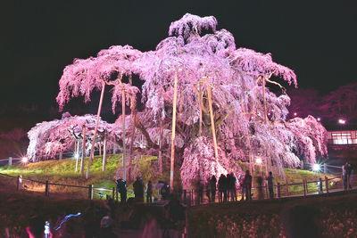 三春滝桜 | 絶景事典