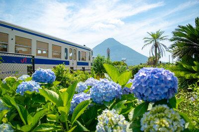 美しく染まる四片を愛でる!可愛らしく咲き広がる紫陽花の絶景5選メイン画像