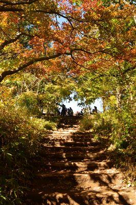 高尾山山頂に登る道 | 絶景事典