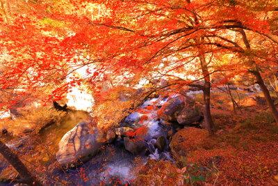 昇仙峡の渓流と紅葉 | 絶景事典