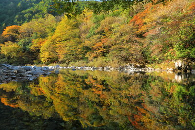 阿寺渓谷の紅葉 水面の反射   絶景事典