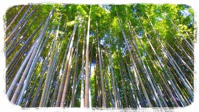 武雄神社の竹林 | 絶景事典