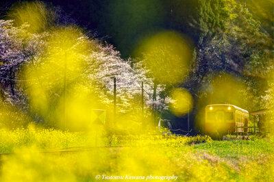 房総里山の春、うららか鉄道~♬ | 絶景事典