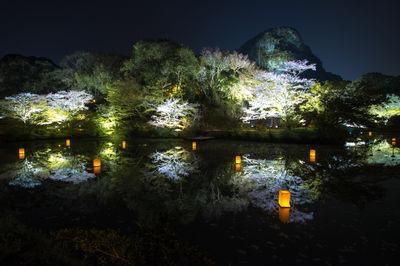 御船山楽園の夜桜 | 絶景事典