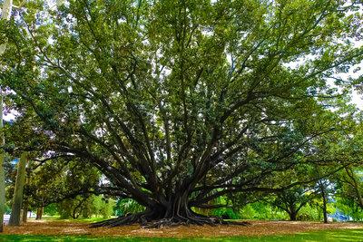 KingsParkの大樹   絶景事典