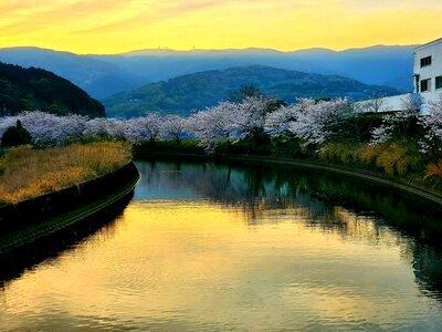 琴海戸根川の桜 | 絶景事典