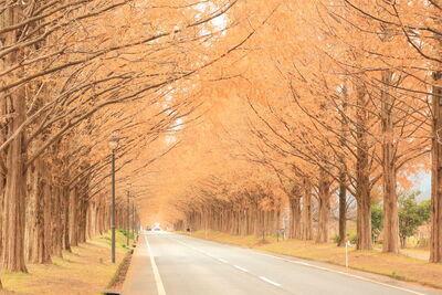 どこまでも長く...遙か彼方までつながる並木道の美景のメイン画像