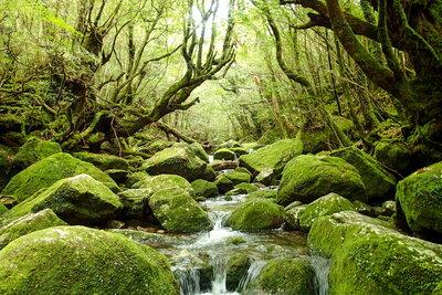 屋久島 これぞ、白谷雲水峡   絶景事典