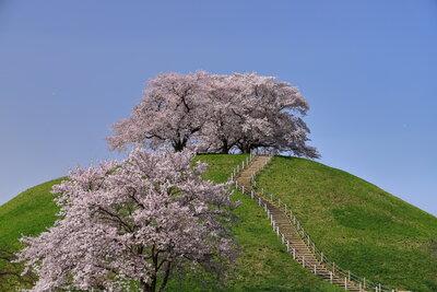 桜満開の丸墓山古墳   絶景事典