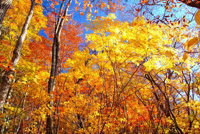 秋の童話 | 絶景事典