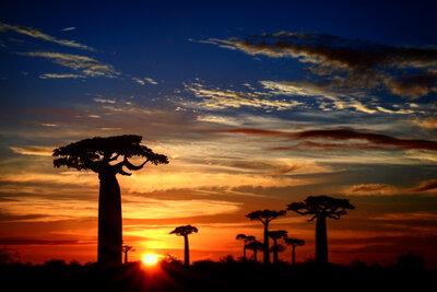 バオバブと日の出   絶景事典