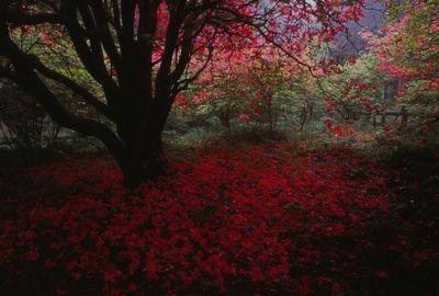 赤い絨毯 | 絶景事典