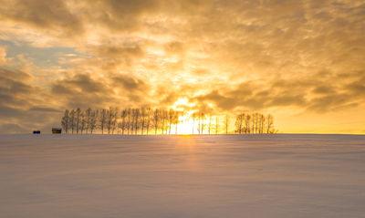 冬の美瑛の丘 | 絶景事典
