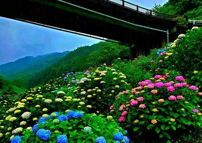 中木庭ダムのあじさい | 絶景事典