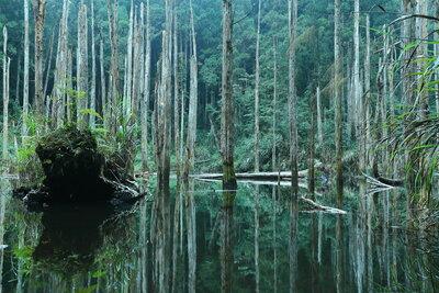 忘憂森林 | 絶景事典
