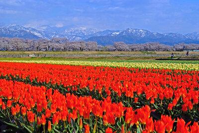 春の日に | 絶景事典