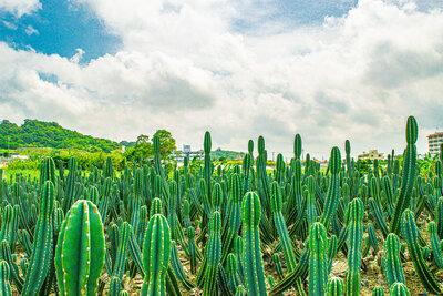 サボテン畑 | 絶景事典