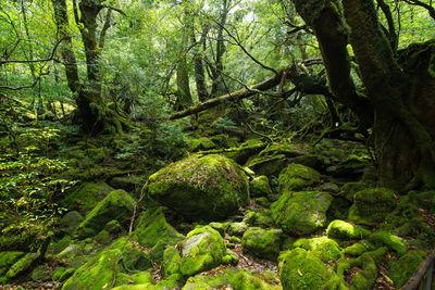 屋久島 今の苔むす森 | 絶景事典