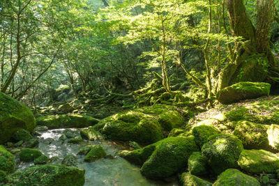 屋久島 光の森 | 絶景事典