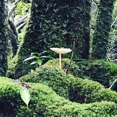 屋久島 『苔むす森』 | 絶景事典