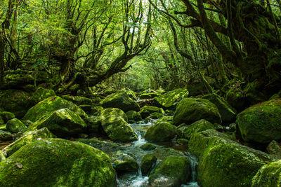太古の森 屋久島 白谷雲水峡 | 絶景事典