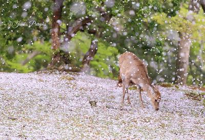 桜吹雪 | 絶景事典