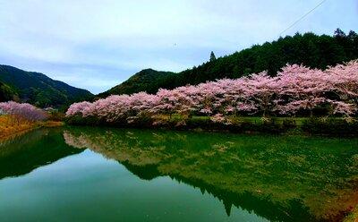 赤穂(あこ)山の八天桜 | 絶景事典