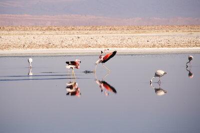 アニマル・ウォッチング! 世界のかわいい動物たちと美しい場所メイン画像