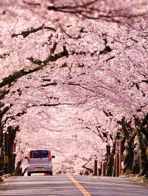桜色の世界 | 絶景事典
