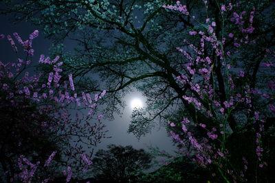 夜桜 | 絶景事典