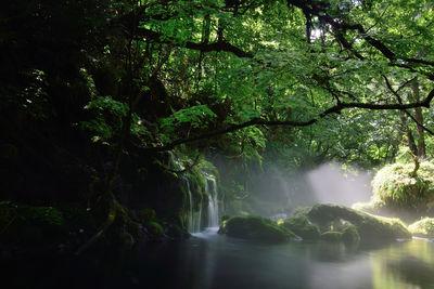 緑の彩 | 絶景事典