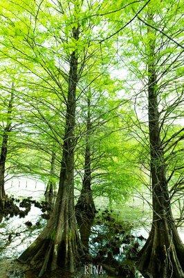 森林浴 | 絶景事典